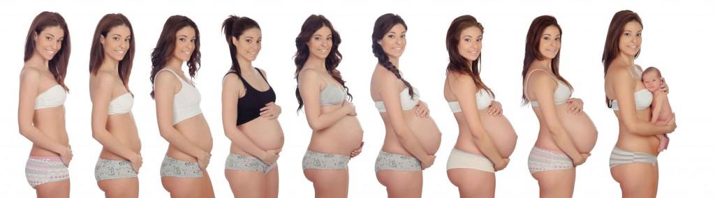 Schwangerschaftsfortschritt